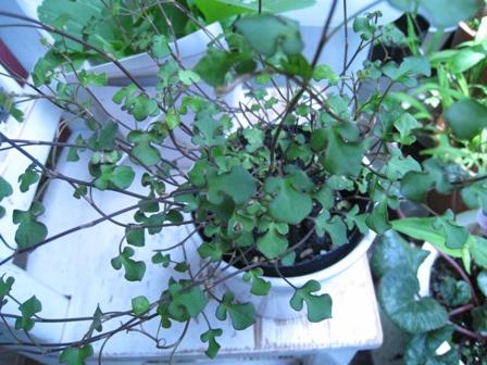 Wireplants