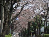 Fukasawa080323