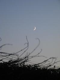 Moon080903